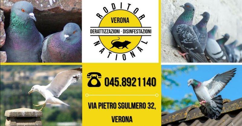 RODITOR NATIONAL - Occasione sistemi professionali per allontanare piccioni uccelli provincia Verona