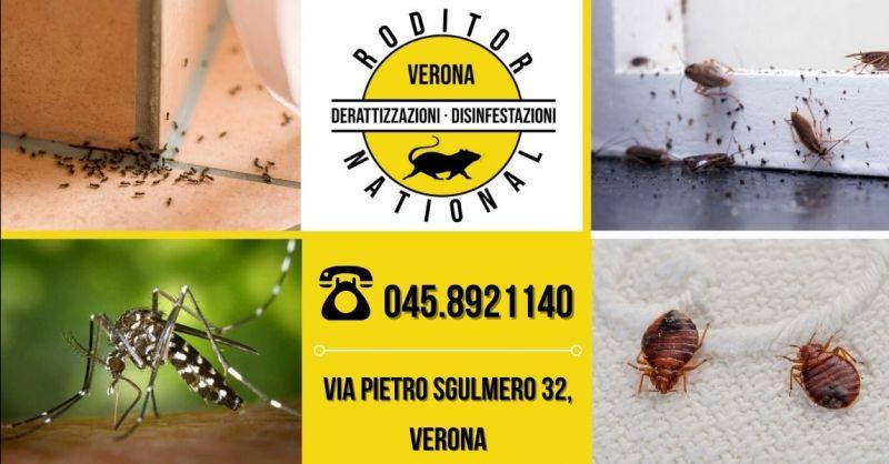 Offerta interventi professionali di disinfestazione processionaria formiche blatte cimici provincia Verona