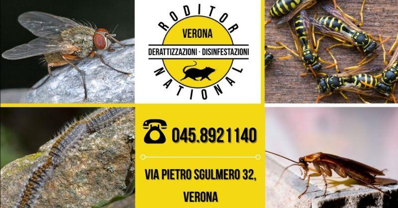 Offerta servizio disinfezione professionale ambienti - Occasione disinfestazione mosche zanzare vespe provincia Verona