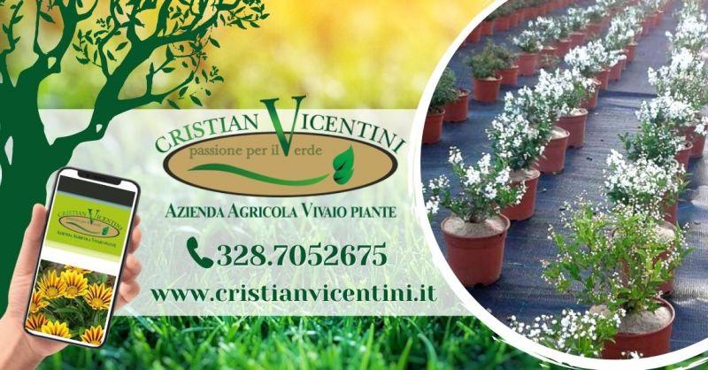 Offerta produzione e vendita piante ornamentali - Occasione servizio potatura taglio siepi provincia Verona