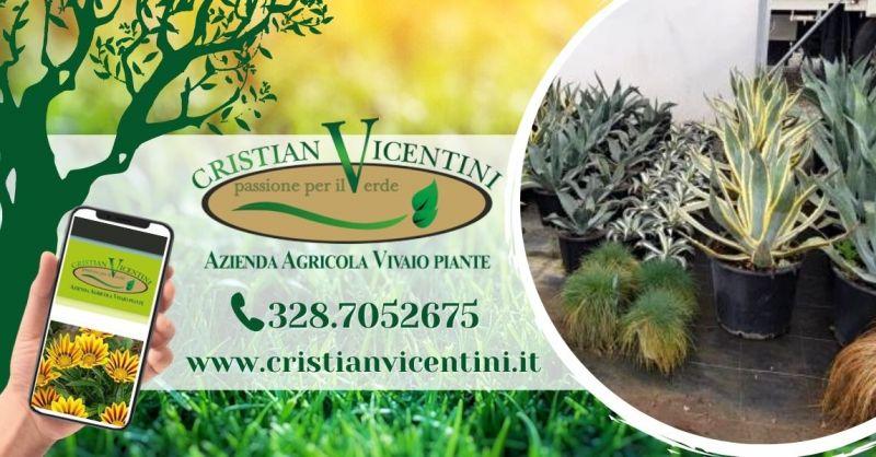 Offerta vivaio piante da giardino provincia Verona - Occasione manutenzione impianto irrigazione giardino