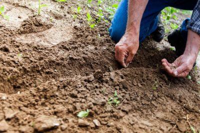 novita prodotti per il giardinaggio ed agricoltura imperia azetagricoltura