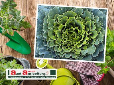 offerta orto autunnale promozione frutteto autunnale azetagricoltura