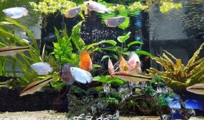 offerta alimenti per animali como promozione acquariologia como
