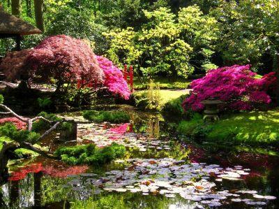 offerta realizzazione laghetto promozione piante acquatiche ninfee e fiori di loto vicenza