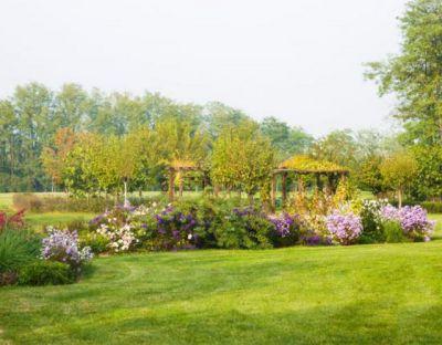offerta vivaio fiori e piante promozione piante per interni ed esterni bearesi giardini