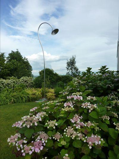 offerta piante da interni e esterni occasione servizi specializzati giardini bearesi giardini