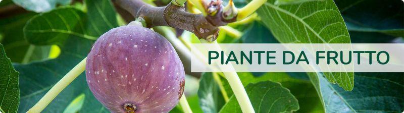 offerta piante da frutto promozione piantine orto occasione articoli giardinaggio agriberica