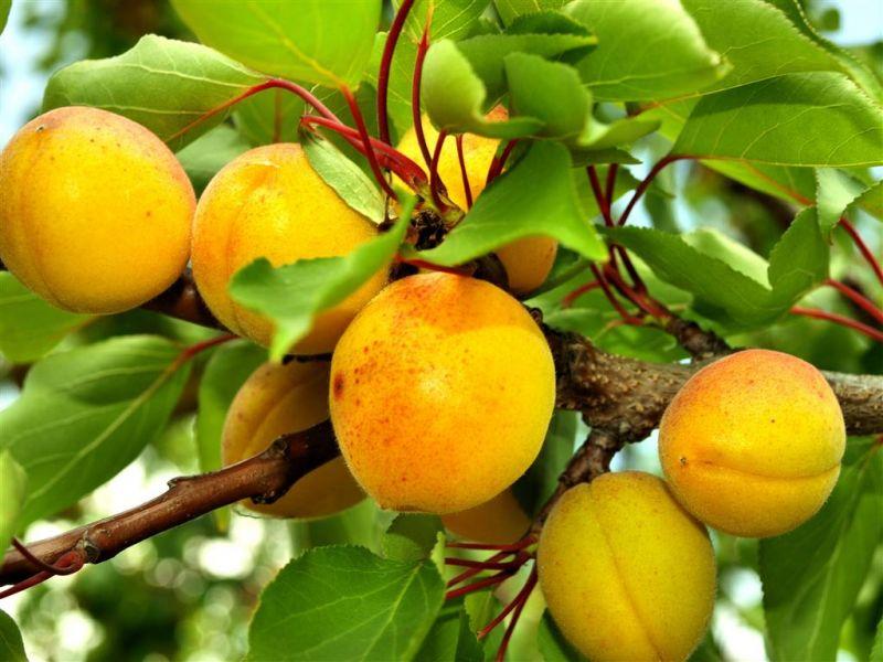 offerta piante da frutto promozione piante da orto occasione sementi giardinaggio vicenza