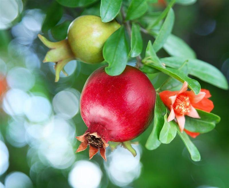 offerta piante da orto promozione sementi bulbi occasione piante da frutto vicenza