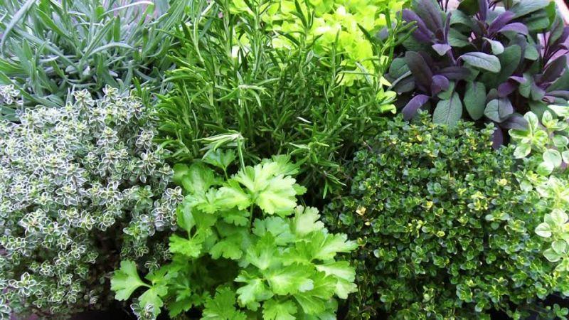 offerta piante da orto occasione piante aromatiche promozione ortaggi vicenza
