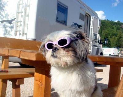 promozione offerta occhiali da sole per cane