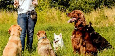 offerta servizio educatore cinofilo promozione addestramento per animali apnec verona