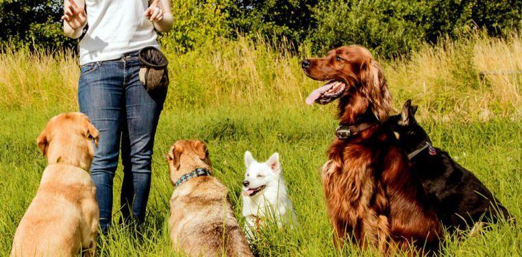 Offerta servizio educatore cinofilo-Promozione addestramento per animali APNEC Verona
