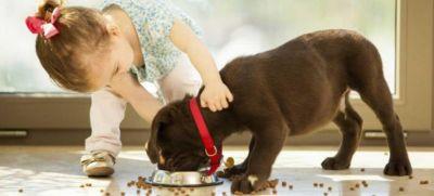 offerta alimenti per animali promozione negozio cibo mangimi crocchette per animali verona