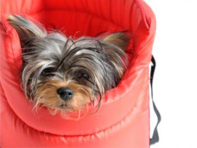 offerta vendita accessori giochi per animali prezzi promozione occasione pet shop verona