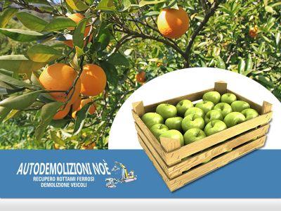 offerta macchinario potatura frutta occasione macchinario raccolta frutta agricola noe