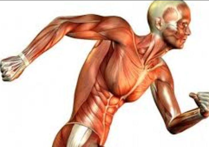cura delle patologie muscolari