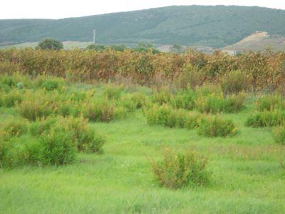 santanna arresi terreno agricolo 4 mori immobiliare