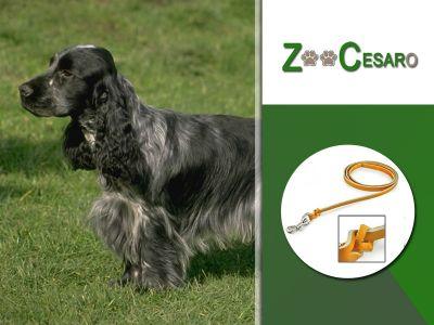 offerta vendita guinzagli per cani terni promozione guinzagli professionali collari terni