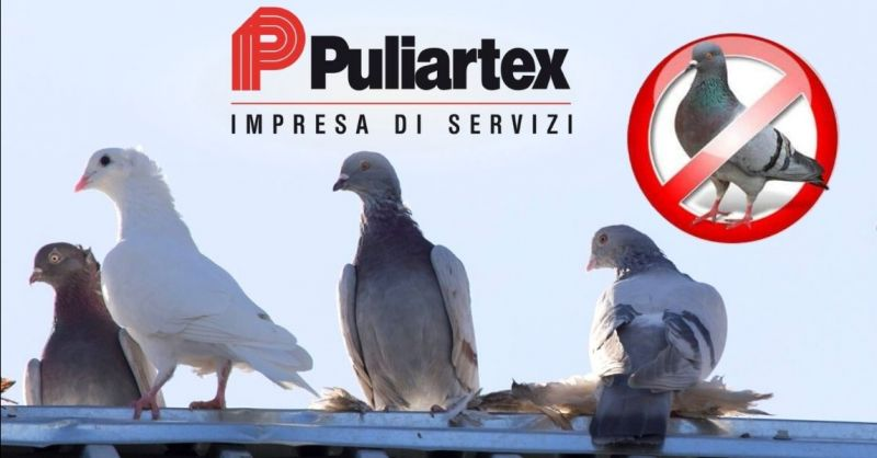 Offerta servizio di allontanamento volatili - Occasione installazione dissuasori volatili Cremona