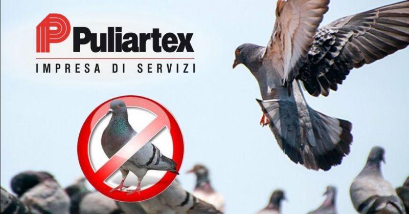 Offerta sistemi di allontanamento piccioni gabbiani - Occasione dispositivi per allontanamento volatili Piacenza