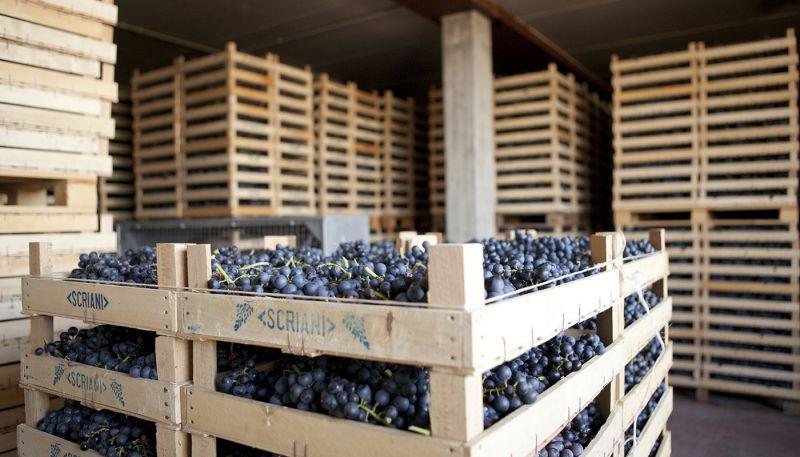 Offerta vendita vini veronesi prestigiosi - Promozione vini pregiati cantine della Valpolicella