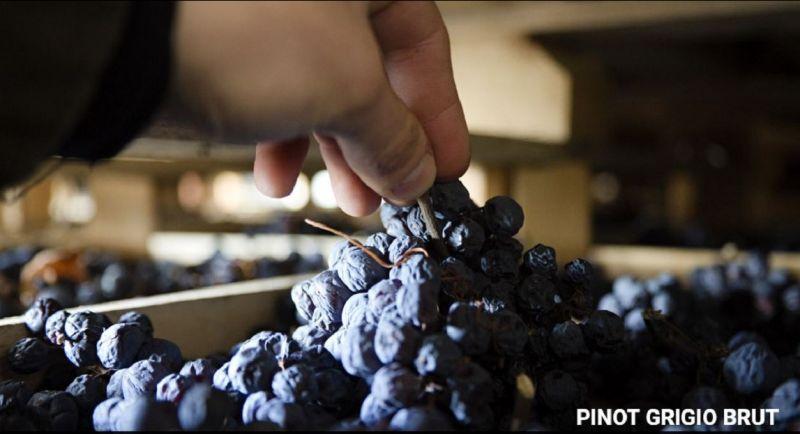AZIENDA AGRICOLA I SCRIANI - Offerta produzione vendita Pinot Grigio 100% produzione Italiana