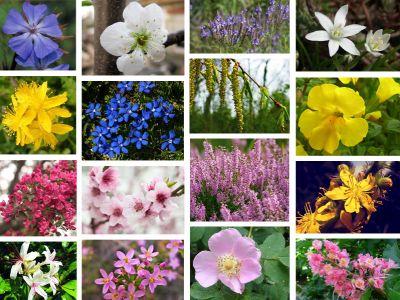 offerta vendita fiori di bach gemma dl castagno occasione vendita prodotti naturali padova