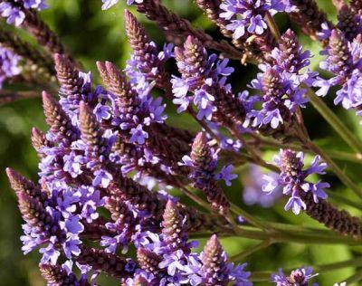 offerta produzione fiori di bach occasione produzione estratti floreali padova