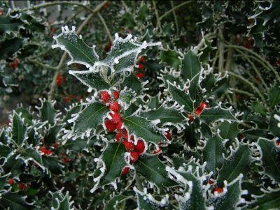 offerta produzione fiori di bach prodotti naturali padova