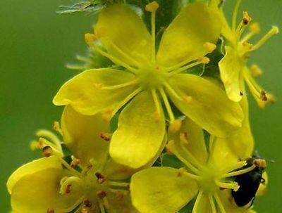 offerta produzione fiori di bach estratti floreali padova