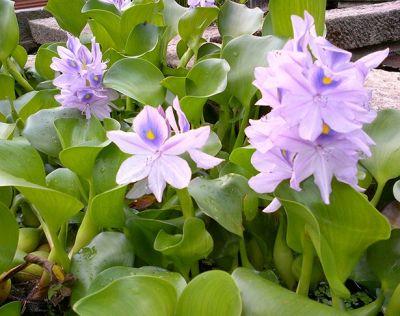 offerta produzione fiori di bach per le piante occasione integratori per piante padova