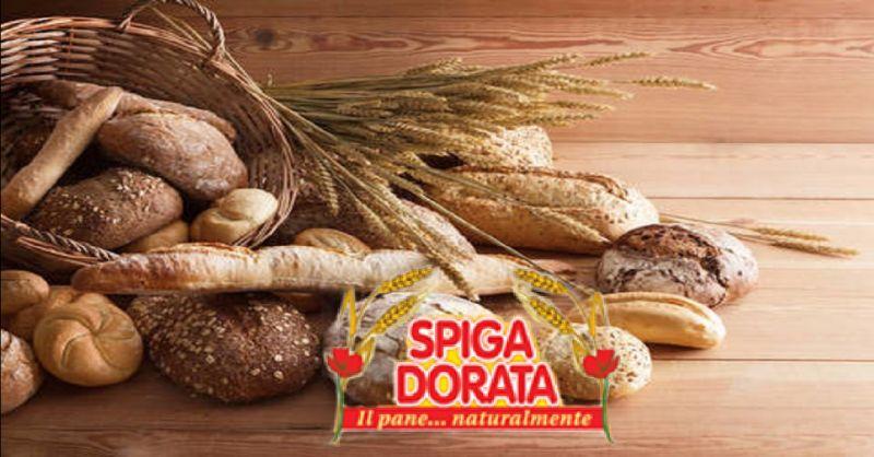 offerta fornitura di pane per aziende Verona - occasione produzione prodotti da forno a Verona