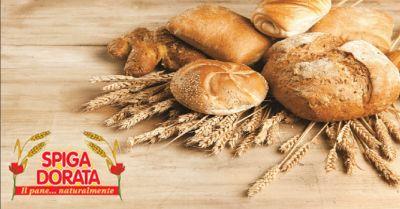 spiga dorata offerta vendita madeleine a verona occasione pane per grande distribuzione