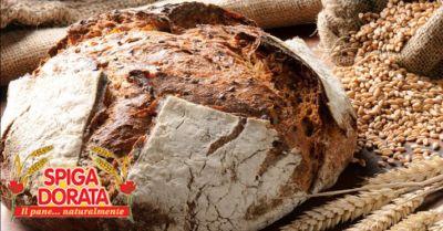 spiga dorata offerta vendita pane ai cereali verona occasione pane con lievito madre
