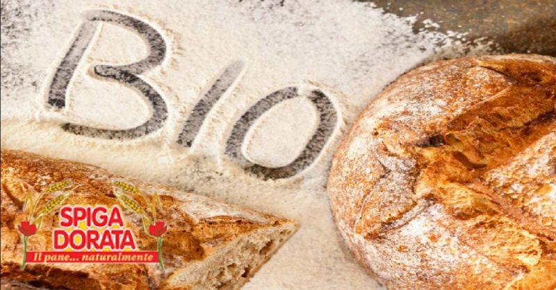 SPIGA DORATA offerta vendita pane integrale a Verona - occasione prodotti sostitutivi del pane