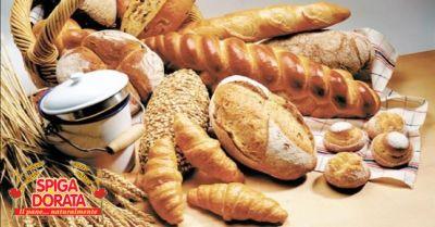 spiga dorata offerta vendita schiacciatine di pane verona occasione vendita pane biscotto