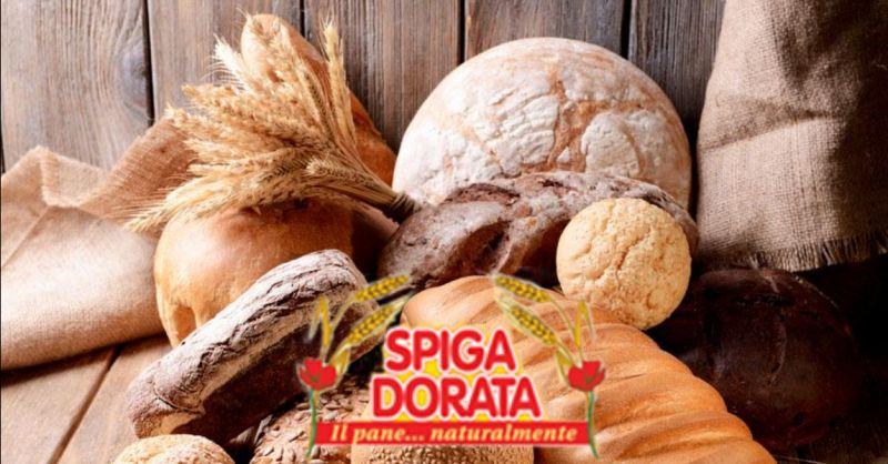 SPIGA DORATA - offerta fornitura pane per punti vendita alimentari Isola della Scala Verona