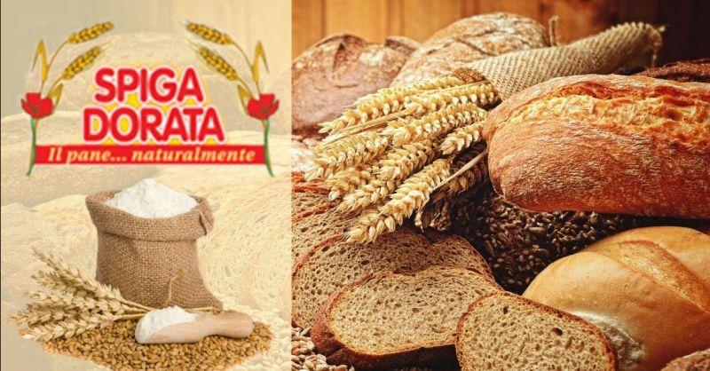 Occasione fornitura pane sfuso e confezionato Verona - Offerta pane per grande distribuzione Verona