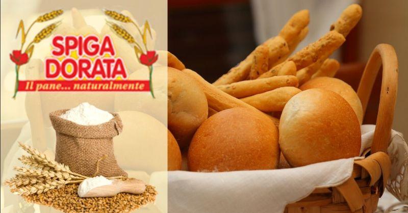 Occasione produzione schiacciatine grissini pan biscotto artigianale - Offerta fornitura pane artigianale Verona