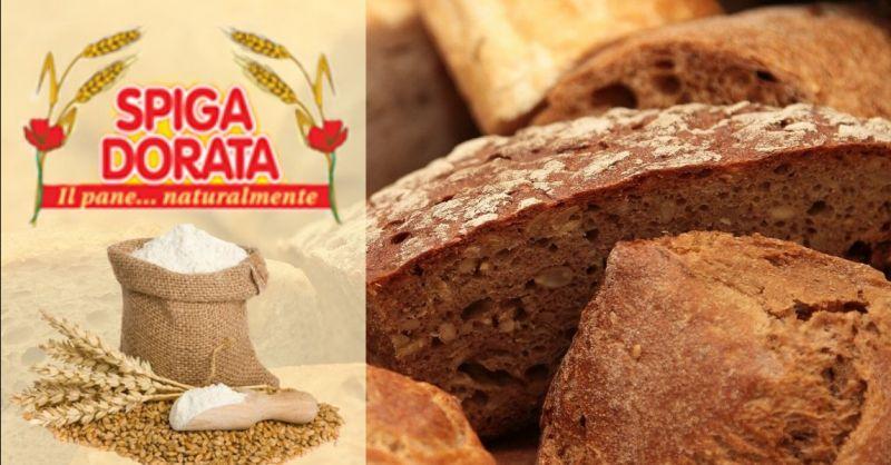 Offerta produzione pane ai cereali madeline Verona - Occasione produzione panettoni colombe artigianali