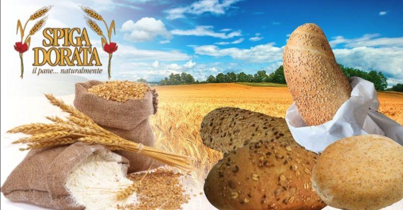 Offerta fornitori di pane all'ingrosso - Occasione produzione pane integrale ai cereali provincia Verona