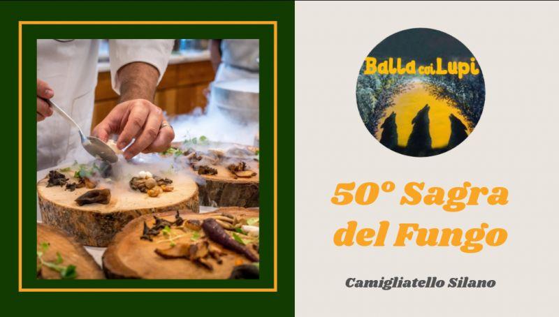 residence balla coi lupi offerta sagra fungo camigliatello - promozione hotel a camigliatello