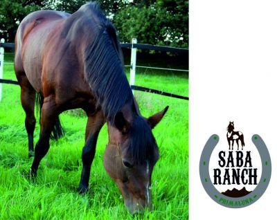 offerta pensione per cavalli lecco promozione lezione di equitazione gratuita lecco saba ranch