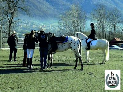 offerta lezione di equitazione lecco promozione scuola di equitazione lecco saba ranch