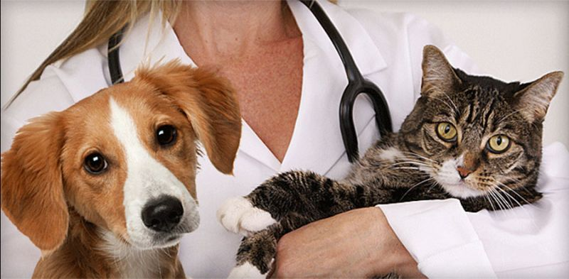 offerta assistenza Ricovero Veterinario - occasione Medicina d'Urgenza veterinaria