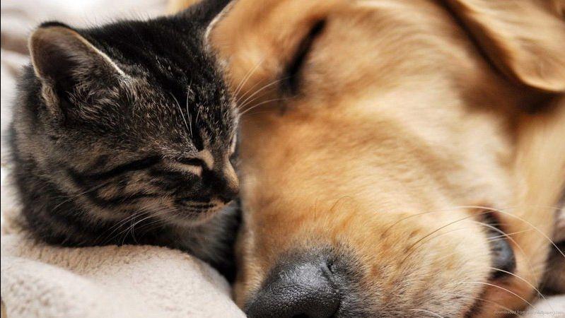 offerta ambulatorio veterinario chilurgia - occasione assistenza veterinaria animali domestici