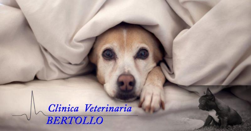 offerta pronto soccorso veterinario urgenze Camisano - occasione emergenza veterinaria Vicenza
