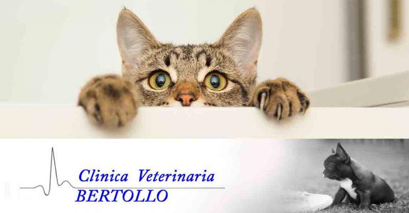 offerta vaccinazioni veterinarie cuccioli Camisano - occasione microchip animali Camisano